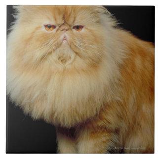 Russian Long Hair Cat Tile