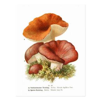 Russula depallens & R.vesca Postcard