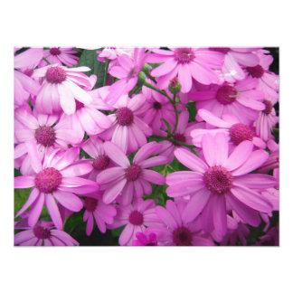 rustic bright vibrant beauty purple large bush photo print