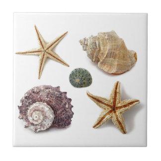 rustic coastal  beach chic seashell starfish tile
