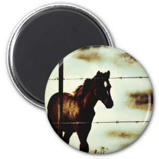 Rustic Horse Colt Foal and Barbed Wire 2 Inch Round Magnet