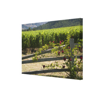 Rustic Vineyard and Rose Fence Canvas Print