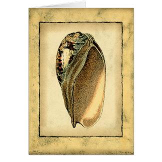 Rustic Vintage Seashell Card