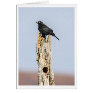 Rusty Blackbird Card