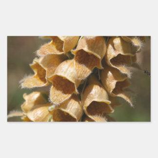 Rusty Foxglove (Digitalis ferruginea)