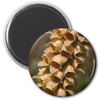 Rusty Foxglove (Digitalis ferruginea) 2 Inch Round Magnet