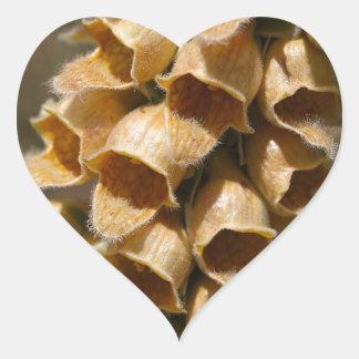 Rusty Foxglove (Digitalis ferruginea) Heart Sticker