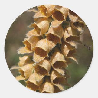 Rusty Foxglove (Digitalis ferruginea) Round Sticker