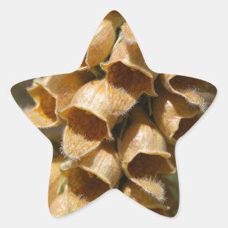 Rusty Foxglove (Digitalis ferruginea) Star Sticker