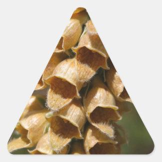 Rusty Foxglove (Digitalis ferruginea) Triangle Sticker