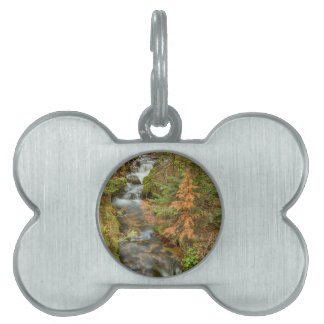 Rusty The Pine Tree and The Flowing Stream Pet Tag