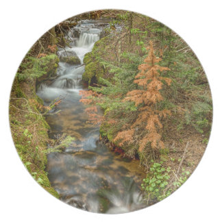 Rusty The Pine Tree and The Flowing Stream Plates