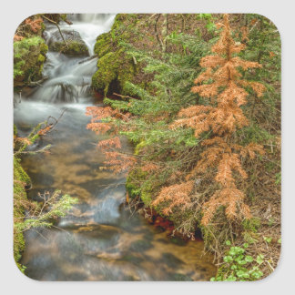 Rusty The Pine Tree and The Flowing Stream Square Sticker