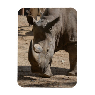 Rutting Rhino Rectangular Photo Magnet