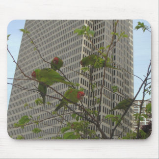 S.F. Wild parrot #6 Mouse Pad