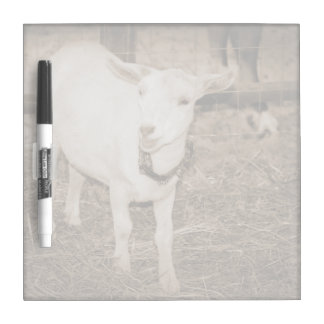 Saanen doeling sepia goat mouth open dry erase whiteboards