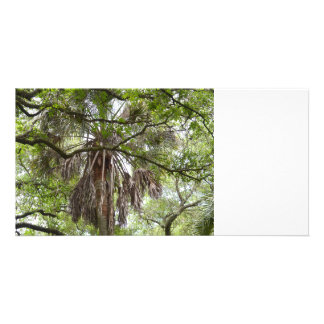 sabal palm through live oak branches tree personalized photo card