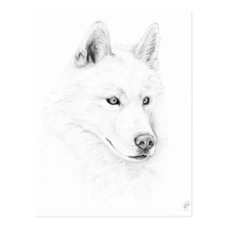 Saber A Siberian Husky Drawing Art Blue Eyes Postcard