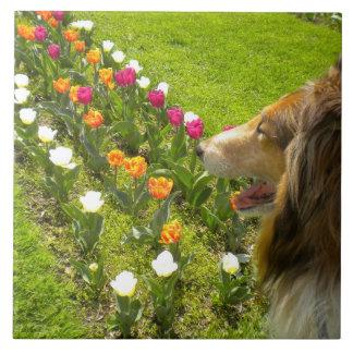 Sable Collie N Tulips Tile Trivet