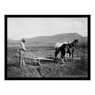 Sacaton Indian Farmer Plowing 1911 Poster