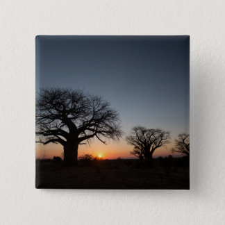 Sacred Baobabs 2 Inch Square Button