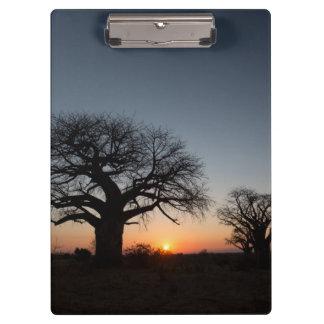 Sacred Baobabs Clipboard