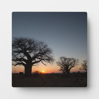 Sacred Baobabs Plaque