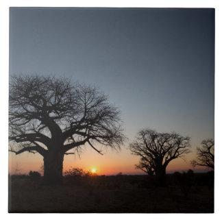 Sacred Baobabs Tile