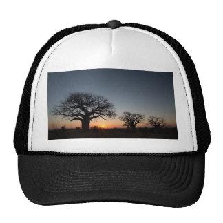 Sacred Baobabs Trucker Hat