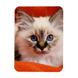 Sacred Birman Kitten Magnet