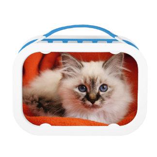 Sacred cat of Burma (Sacred Birman kitten) Lunch Boxes