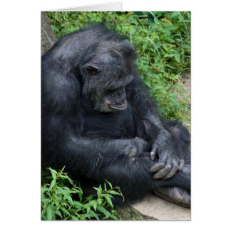 sad chimpanzee get well card