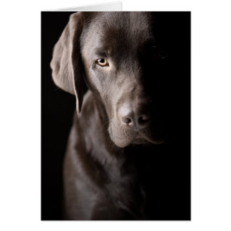 Sad Chocolate Labrador Card