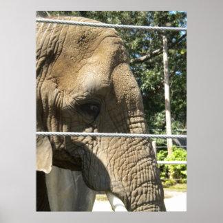 Sad Elephant Poster