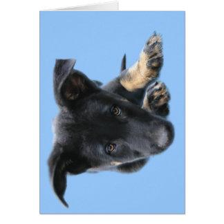 Sad Eyed Pup Card