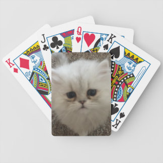 Sad eyes white fluffy kitten looking up bicycle playing cards