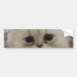 Sad eyes white fluffy kitten looking up bumper sticker