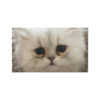 Sad eyes white fluffy kitten looking up canvas print