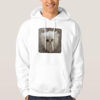 Sad eyes white fluffy kitten looking up hoodie