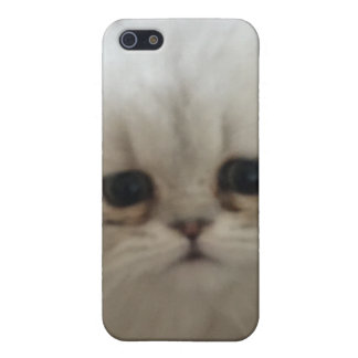 Sad eyes white fluffy kitten looking up iPhone 5/5S cases