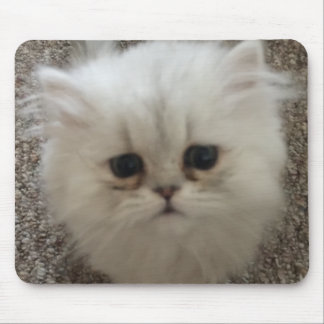 Sad eyes white fluffy kitten looking up mouse pad