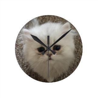 Sad eyes white fluffy kitten looking up round clock