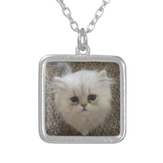 Sad eyes white fluffy kitten looking up silver plated necklace
