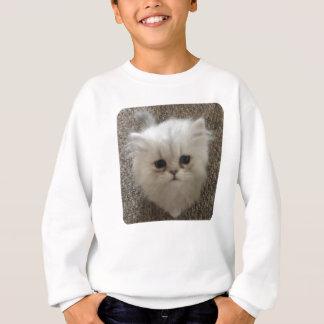 Sad eyes white fluffy kitten looking up sweatshirt