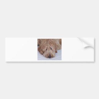 Sad, Lonely, Adorable, & Cute GoldenDoodle Dog Bumper Sticker
