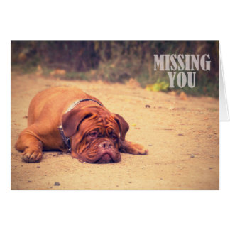 Sad Lonely Bordeaux / Dog Missing You Card