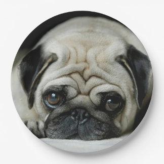 Sad pug - dog lying down - dog look - cute puppies paper plate