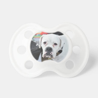 Sad White Boxer Pacifier