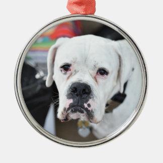 Sad White Boxer Silver-Colored Round Ornament