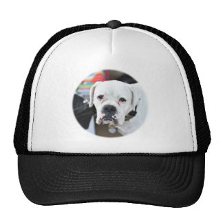 Sad White Boxer Trucker Hat